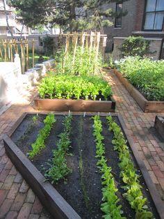 cedar vegetable beds and brick paths