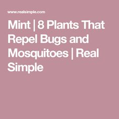 Mint | 8 Plants That Repel Bugs and Mosquitoes  | Real Simple
