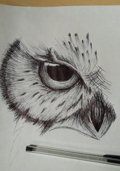 Trying to do some drawing everyday, this was a quick owl sketch done with just a cheap ballpoint pen.