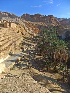 Каменистая пустыня. Оазис