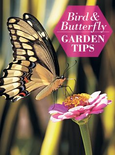 Book: Bring more birds and butterflies into your garden!  #birds #butterflies #butterflygarden #birdgarden