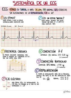 French Flashcards, Medicine Student, Medical Anatomy, Med Student, Nursing Notes, Med School, Medical School, Physiology, Study Tips