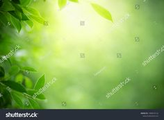 Closeup Nature View Green Leaf On ภาพสต็อก (แก้ไขตอนนี้) 1480674122 Nature Green, Green Leaf Background, Nature View, Green Leaves, Stock Photos