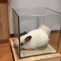 Funny Animal Videos, Cute Funny Animals, Animal Memes, Cute Baby Animals, Animals And Pets, Chinchilla Baby, Little Critter, Cute Creatures, Cute Gif