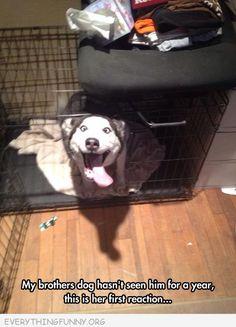 Happy Husky is happy