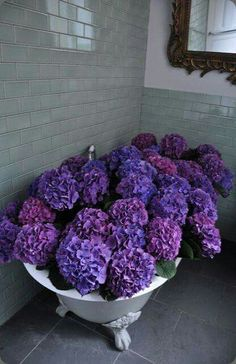 A bath of purple