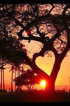 #sunset #heart #corazón #árbol #belleza #naturaleza #landscape
