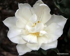 Branco natural