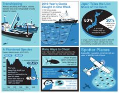 How Bluefin Tuna are overfished in illegal and unregulated ways.