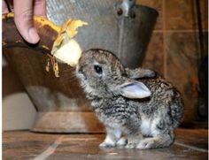 bunny feeding...adorable!