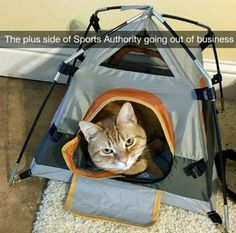 'Sometimes I wonder if I spoil the cat, seeing him with his iPad, in his yurt.'