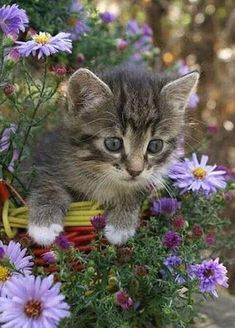 To grow a kitten, one must have plenty of sunshine, kibble, water and kitty litter available. Kittens And Puppies, Cute Cats And Kittens, Cool Cats, Kittens Cutest, Beautiful Kittens, Pretty Cats, Animals Beautiful, Pretty Kitty, Cute Baby Cats