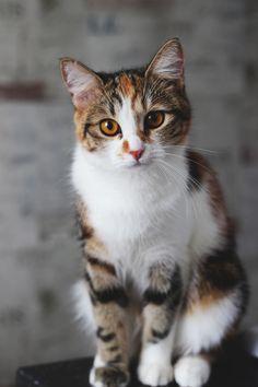 Photo by Anastasia Nesterova (Nast-Nest) #cat #kitty #photographer