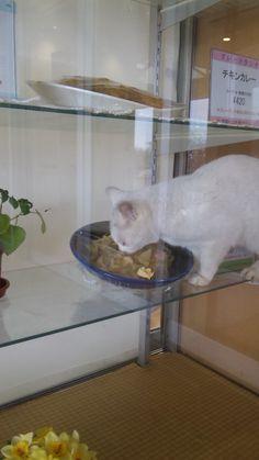 食堂のサンプルケースに猫が... - 写真共有サイト「フォト蔵」