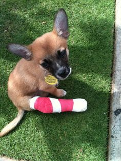 And this one, who�ll just sit here if that�s OK with you.   16 Puppies In Casts Who Are So Cute It Hurts