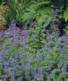 Best plants for sunny borders - workhorse perennials from fine Gardening
