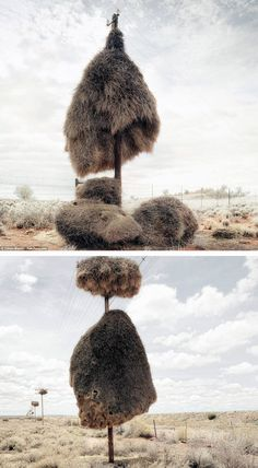 Africa | Just 2 examples of the amazing nests made by weavers in the vast wastes of the South African Kalahari desert. Nests can weigh up to a ton and hold more than 100 tiny sociable weaver birds.  The male weavers build these nests on telegraph poles (an area where there is a hardly any trees to offer shelter) or on the ground using twigs and sticks to attract a mate | ©Dillon Marsh