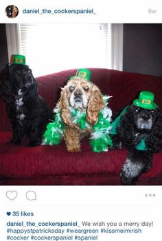 Daniel the Cocker Spaniel shows off his holiday spirit on his very own #Instagram account