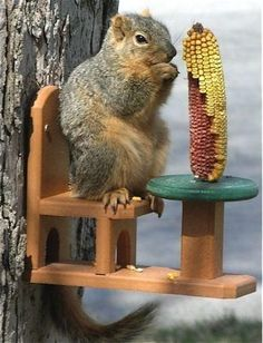 Durable Squirrel Feeder s guaranteed for life! A fun design in new recycled plastic, this poly lumber squirrel feeder features a table and chair where squirrels