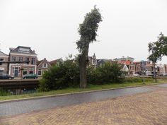 standing on the canal of Heerenveen of Friesland