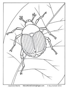 beetle coloring pages, insects coloring pages