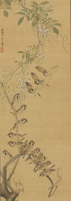 Nagasawa Rosetsu, Sparrows Alighting on Wisteria, ca. 1795-99, Japan. Hanging scroll; ink and color on silk