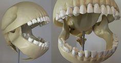 Ever wonder what Pac-Man's skeleton would look like?