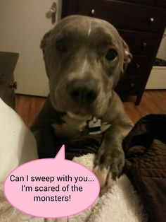 Luna Belle trying to beg her way into my bed. American Staffordshire Terrier;  Pitbull