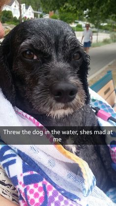 Tried to teach my dog how to swim. http://ift.tt/2coKNW6