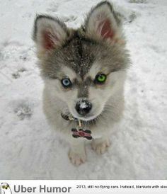 Blue & green-eyed baby
