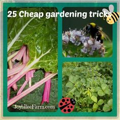 25 Cheap gardening tricks for self reliance on your homestead