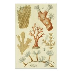 Shop Vintage Coral Animals, Science Textbook Biology Poster created by YesterdayCafe. Illustration Française, Illustration Botanique, Illustrations, Botanical Drawings, Botanical Prints, Antique Prints, Vintage Prints, Biology Poster, Scientific Drawing