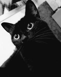 #cat #blackcat #gato #pet
