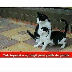 #mizah #komedi #kedi http://turkrazzi.com/ipost/1519450196696884351/?code=BUWK-dMA-R_