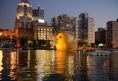 Rubber Ducky in Pittsburgh