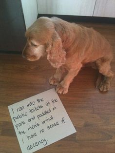 shaming funny dog photos | Dump A Day Random Funny Pictures - 55 Pics