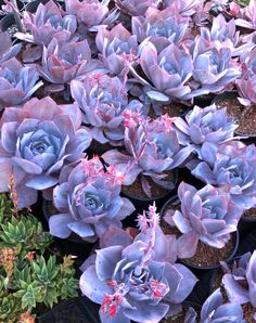 Succulents are extremely popular these days. They're easy to care for, since they require little water and maintenance. Here's everything you need to know about these awesome plants!