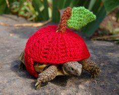 Biiiiiiiiiig Apple 18 Cute Cozies Your Tortoise Can Rock This Winter Cute Reptiles, Reptiles And Amphibians, Animals And Pets, Baby Animals, Cute Animals, Sulcata Tortoise, Pet Turtle, Tortoise Turtle, Cute Turtles