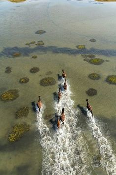 """""""Wild horses wouldn't be wild if we had them all in our grips. Lets keep our wild horses free spirited. What would we do if that beauty left us, and was forever gone?! Wild horses, lets keep them that way...""""  -Me"""