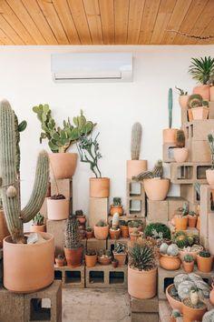 Cactus Store in Echo Park, LA - Haarkon in California. Cactus Store in Echo Park, LA - Haarkon in California. Indoor Cactus Garden, Cactus House Plants, House Plants Decor, Cactus Decor, Cactus Garden Ideas, Big Indoor Plants, Cactus Planta, Cactus Y Suculentas, Cactus Store