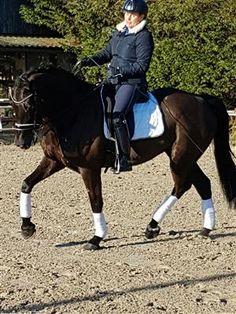 Paarden te koop: DRESSUURPAARD