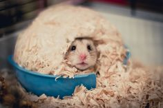Stuart le Hamster
