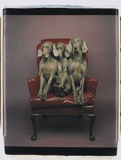 William Wegman - Trio, 1991