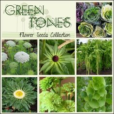 Green Flowers - Seed Collection