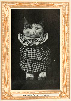 efbb0fe929c4 The Best-Dressed Cats of the Epoch Times · Lomography Nice Dresses