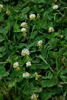 Eco-friendly Lawn Weed Control - A healthy lawn is your best defense against weeds. So if you want to reduce the problem - long term- you need to learn a bit more about the weeds...