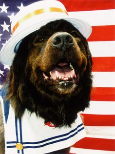 """""""If you want a friend in Washington, get a dog."""" -- Harry Truman"""