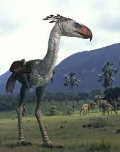 Terror Birds: The Tyrants of Patagonia
