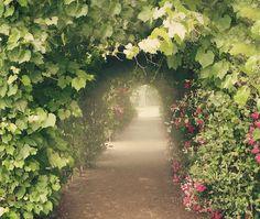 SUBLIME!!!! ---- Perfect place to wear our Vanilla Orchid Cake Perfume! Paris Gardens - Marie Antoinette's Rose - Paris