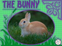 This file is great for ELLs, Special Ed. or Mainstream classes!  It's a simple picture story about a bunny who ate too many carrots. He  could not fit through the fence to go home. Vocabulary includes: bunny, hutch, lawn, carrots, fence, tummy, darkness, hole, garden, ball,and Happy Easter!